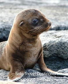 Solo Travel Destination: Galapagos Islands http://solotravelerblog.com/solo-travel-destination-galapagos-islands/