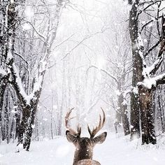 Winter wonderland discovered by nlilllyy on We Heart It