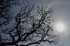 silhouette of tree on a winter day