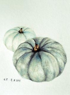 Image result for pumpkin botanical illustration coloured pencil