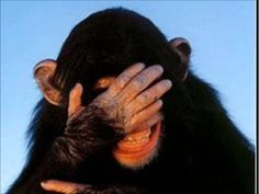 Laughing Chimp GIF - Tenor GIF Keyboard - Bring Personality To Your Conversations Love Images, Images Gif, Funny Videos, Funny Gifs, Funny Memes, Monkey Gif, Animals And Pets, Funny Animals, Funny Emails