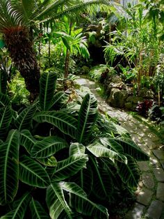 tropical conservatory - Google Search