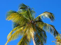 Palm tree at the Virgin islands