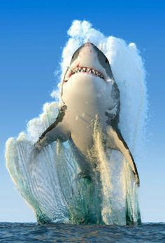 """THE GREAT WHITE Sharks have a dimension of intelligence that is unique to that animal, especially a great white shark. A great white shark has this organ called ampullae of Lorenzini, and that can actually detect electromagnetic disturbances """" Beautiful Creatures, Animals Beautiful, Animals And Pets, Cute Animals, Baby Animals, Unique Animals, Funny Animals, Wale, Ocean Creatures"""