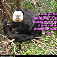 Idea gabriel spank the monkey join told