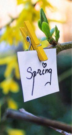 winter brings...spring,eventually.