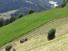 Bauern beim Heu machen in Stuls im Passeier Tal auf der Wanderung auf dem E5 im Juni 2010 - endlich kein Schnee mehr! | Etappe 7 | Südtirol | Italien |