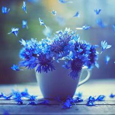 flowers,floral,blue,macro,vases,ipad3