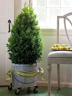 Decorate With Tiny Christmas Trees