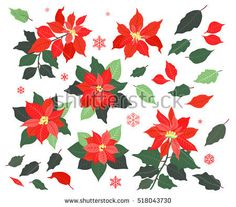 Christmas Collection of decorative red flowers poinsettia and leaves for your design. Christmas decoration. Floral Design elements. Vector Set of Christmas flowers of poinsettia.