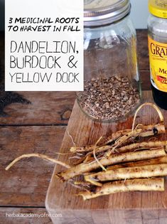 Herbal Medicine Three Medicinal Roots to Harvest in the Fall - Common medicinal roots, such as dandelion, yellow dock and burdock, have well-established uses so it's worth getting to know how to harvest and use them. Herbal Remedies, Health Remedies, Home Remedies, Healing Herbs, Medicinal Plants, Poisonous Plants, Natural Medicine, Herbal Medicine, Natural Cures