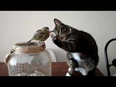 A cat and a bird are left alone. Watch what happens next! https://youtu.be/HwE7aS2PIsE