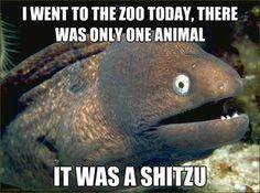 21 Bad Jokes from The Bad Joke Eel