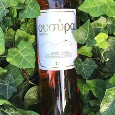 Have you ever tasted Fokiano? It's a rare red grape variety from Cyclades! OuSyra winery uses Fokiano for their delicate yet sublime rose wine, OuSyra Rose! Don't miss it, it loves summery, stuffed tomatoes! 👉check link in bio for more 👈 📸photo credits to @kikajit  #botiliagr #wine #winelover #rosewine #drinkpink #fokiano #ousyrawinery #syrosisland #drinkgreekwine #raregrapevariety #boutiquewinery #summerwine #foodandwine #winewednesday #jointhewinerevolution #botiliagang Stuffed Tomatoes, Wine Wednesday, Red Grapes, Wine Recipes, Delicate, Lifestyle, Drinks, Bottle, Rose