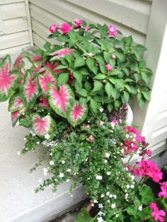 Potted plant on front porch