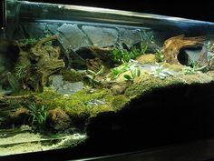 gecko+terrarium | Geckos-Leopard - New Project: Naturalistic Vivarium!