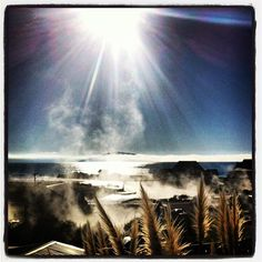 Misty lake rotorua
