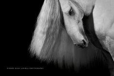 Sammy Deluxe | Tinker || Photo: Wiebke Haas | www.wiebke-haas.de #Equinephotography #Pferdefotografie #fineart #horse #horses #equus #equine #pferd #pferde #tinker