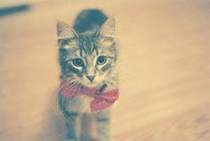 kitten wearing a bowtie :D