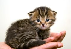 How to Take Care of an Abandoned Newborn Kitten