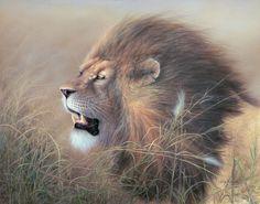 pictures of the lion of judah | Lion_of_Judah_web.jpg