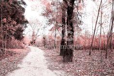 Park of Ois da Ribeira - fotografia de stock royalty-free