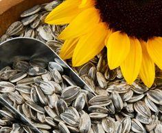 health benefits of SUNFLOWER seeds | Sunflower Seeds Health Benefits And Nutrition Fact:Get Healthy Life