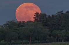 Session de rattrapage pour celles et ceux qui n'ont pas pu voir le lever de la Pleine Lune du vendredi 13 juin. Finalement, sa couleur n'était pas celle d'une fraise, mais plutôt celle d'une orange!   Lever de la Pleine Lune du vendred