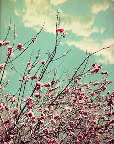 Pink Lapacho Tree Branches Fine Art Photograph on Etsy, $15.00
