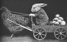 Peter Rabbit loses the plot
