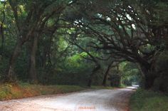 Edingsville Beach Road, Edisto, SC :) My grandmother's house was at the very end of this road on a boat landing! :) This makes me miss it so much more!