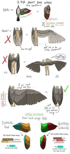 Anatomy of Bird Wings and drawing onto other beings. So Your Angels Have Bird Wings by squidlifecrisis Art Reference Poses, Drawing Reference, Drawing Poses, Drawing Tips, Drawing Stuff, Drawing Ideas, Art Sketches, Art Drawings, Art Du Croquis
