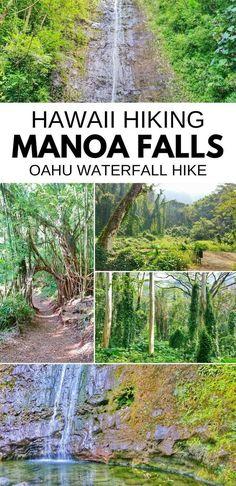 Manoa Falls Trail :: Best waterfall hikes on Oahu :: Hawaii - Travel tips - Travel tour - travel ideas Oahu Vacation, Vacation Ideas, Honeymoon Ideas, Travel Destinations Beach, Travel Tips, Travel Ideas, Travel Photos, Manoa Falls Oahu, Honolulu Hawaii