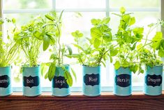 indoor garden How to Make a DIY Indoor Window Sill Herb Garden -Save money, prevent food waste, and bring a little green inside with this easy and cheap DIY Indoor Window Sill Herb Garden for fresh herbs all year long! Herb Garden In Kitchen, Kitchen Herbs, Home Vegetable Garden, Herbs Garden, Garden Types, Hydroponic Farming, Hydroponic Growing, Hydroponics, Diy Hydroponik