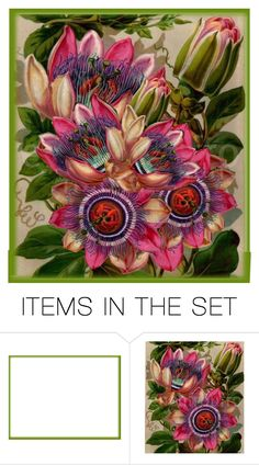 """Passiflora"" by lovetodrinktea ❤ liked on Polyvore featuring art"