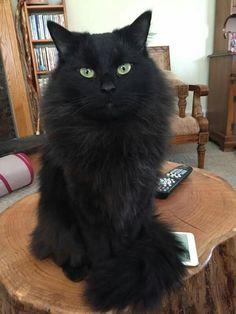 Hotest čierna mačička