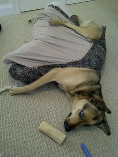 14 Dogs Who Forgot How To Bed