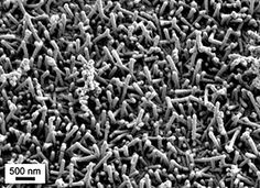 Scanning electron microscope image of the one-micrometer thick nanocoatings on a silicon substrate