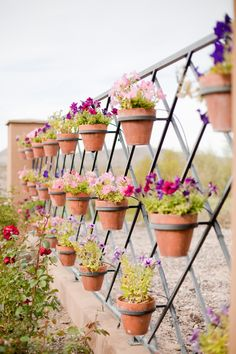 Potted plants for spring flowers spring pinterest spring potted plants for spring flowers spring pinterest spring flowers flower and flowers mightylinksfo
