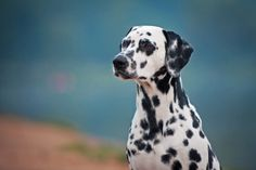 As their breed names often attest, dogs are a truly international bunch. Named for their places of origin and sometimes even their original breeders, breed