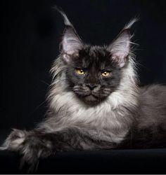 Ghostly grey cat