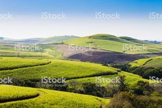 A view of the Valley of a Thousand hills near Durban, South Africa royalty-free stock photo Durban South Africa, Pattaya, Image Now, Golf Courses, Royalty Free Stock Photos, River, Landscape, Nature, Outdoor
