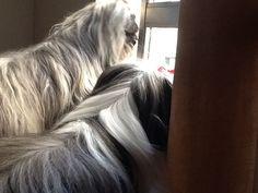 Em cima do sofá dando uma espiadinha na janela- nov 2013