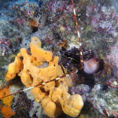 Ayvalık dalış okulu - ida dalış merkezi #scuba #scubadiving #diving #underwater #dalisnoktam #ayvalikdalis #ayvalikscuba #daliskursu #dalisokulu #ayvalikida #idadalismerkezi www.idadiving.com