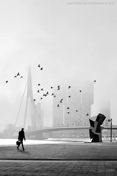Best place of Holland: Rotterdam Urban Photography, Street Photography, Rotterdam Netherlands, Parks, Excursion, Voyage Europe, Utrecht, Black And White Photography, Cool Pictures