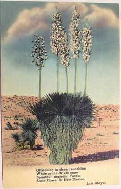 State flower of New Mexico.
