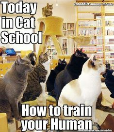 Obedience school for humans by cats - Cat memes - kitty cat humor funny joke gato chat captions feline laugh photo