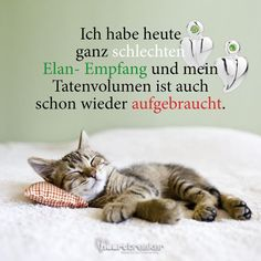 have very bad Elan reception today and my crime volume is also scho . - Sprüche -I have very bad Elan reception today and my crime volume is also scho . Animals And Pets, Funny Animals, Cute Cats, Funny Cats, Allergic To Cats, Gatos Cats, Friend Memes, Humor Grafico, Cat Wallpaper