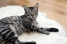 Tips & Tricks: Feline Good Ensuring Good Health When Taking your Cat on a Family Holiday