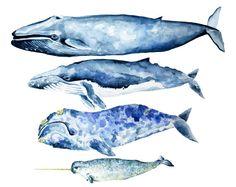 Four Whales Heading West Giclée Print. by VioletteTideStudios